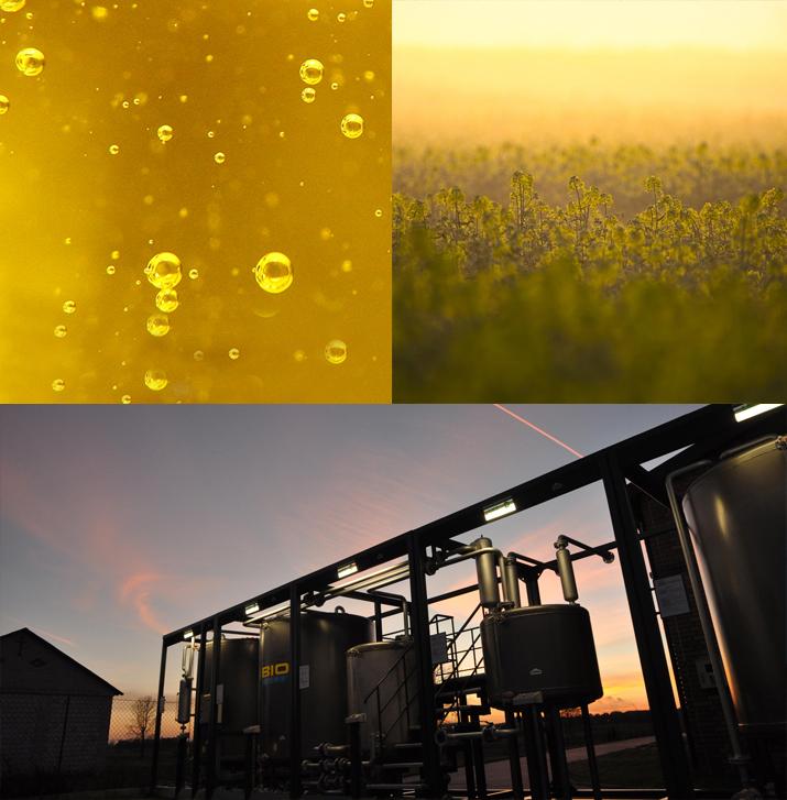 biomasa-pole-rzepaku